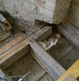 Dry rot affected bressummer beam