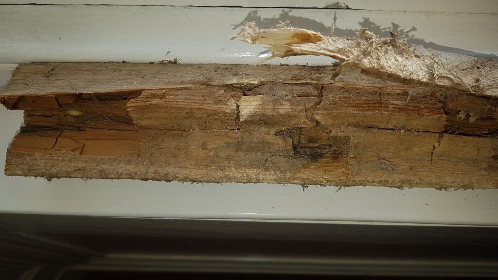 Dry rot affecting treated timber via a cut in the timber.